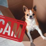 Don't fall for internet puppy scams