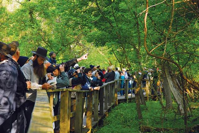Photo courtesy OhioMagazine.com As of today, Magee Marsh, along with many Ohio State Park facilities are closed until further notice.