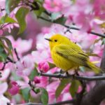 Protect wild birds in your yard