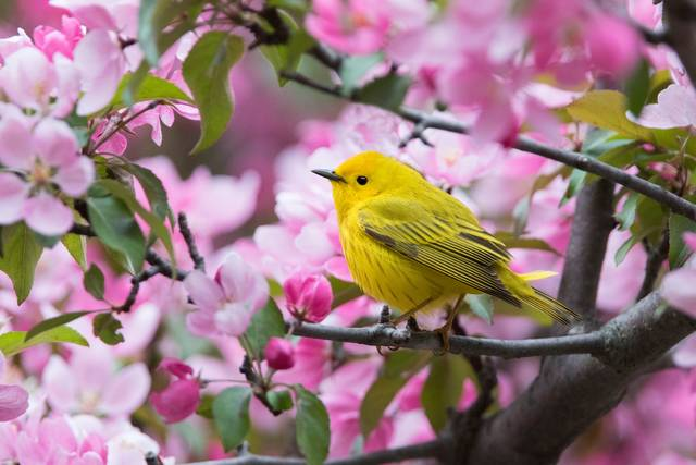 Photo courtesy mirceax/iStock via Getty Images Plus Good deeds start at home. This season, do your part to help migrating bird populations reach their destinations safely.