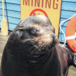 As Columbus Zoo and Aquarium preps to open, it welcoms several harbor seals, sea lions
