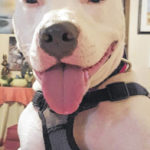 Opinion column: There ain't nothing like a great dog!