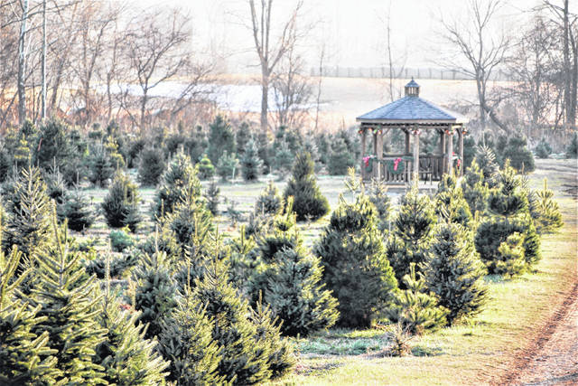 Kleerview Farm near Bellville sells between 2,500 and 3,000 Christmas trees annually. Owned and operated by Kevin and Debbie Kleer, the farm has been providing Christmas trees to local families for the past 39 years. It's located at 2454 Baughman Road, about six miles west of Bellville.