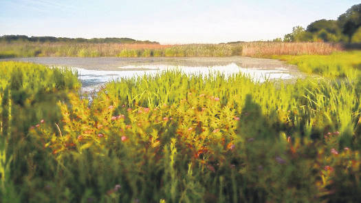 Wildlife not seen for years is returning to Mentor Marsh after more than 200 acres were restored.