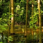 Ohio sportsmen and women: Smaller streams need protections