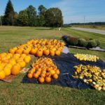 Autumn means pumpkins, fun in the Valley