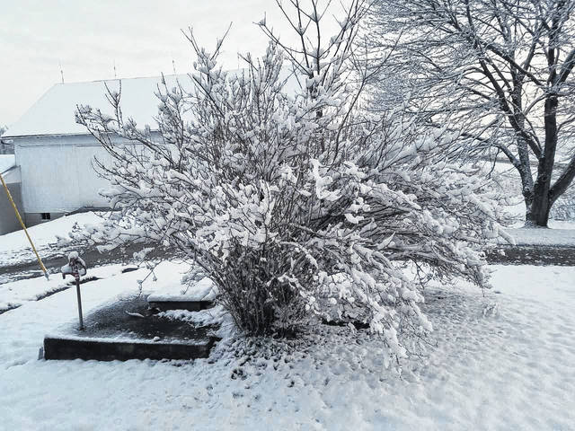 This scene shows results of an overnight snow storm in the region. Trees were covered, but snow began to blow off and melt. Louise Swartzwalder   Bellville Star