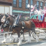 Budweiser Clydesdales in Delaware's All Horse Parade