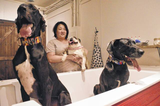 Kimberly Zoob, the owner of Real Big Puppy, 28B S. Sandusky St., shows the size of one of the boutique's wash tubs with her two Great Danes, Oakley and Mason, while holding her English bulldog, Sophie. The store provides retail products and two self-wash tubs for dogs up to 200 pounds.