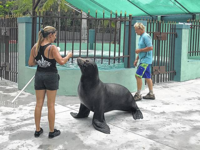 The Columbus Zoo and Aquarium will be home to seven California sea lions in 2019. Zoo officials are preparing a habitat for the marine mammals, which are currently being housed at an interim facility in Florida until their new home is ready.