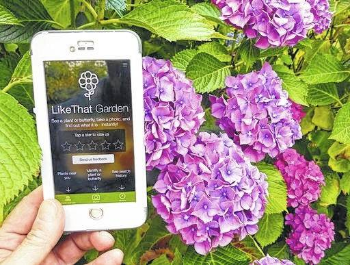 "A gardener in Langley, Wash., is shown holding a mobile phone with app called ""Like That Garden,"" which is one of the many entries in the expanding field of apps designed to instantly identify unknown plants or butterflies from a photo taken by the phone camera."