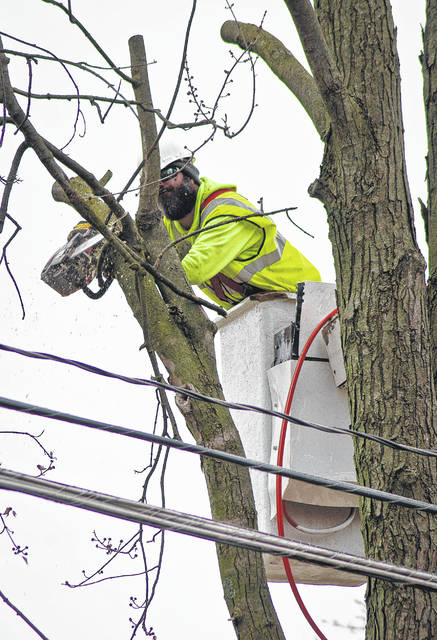 """Look out below"" was heard several times Wednesday as preparation of the East William Street widening project began with the cutting down of trees. Crews began to remove trees along the heavily used route Monday, while flaggers kept traffic delays at a minimum."