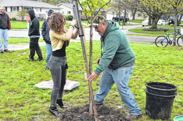 City Arborist Doug Richmond stakes into the ground an autumn blaze maple Friday morning with the help of Hayes High School senior McKenna Roush. Richmond said when the tree is full grown, it could reach 30 feet in height and width.