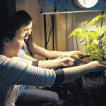Hydroponics club sees roots of labor