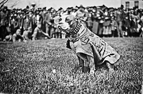 "Sgt. Stubby was the 102nd Infantry Regiment's mascot during World War I and the most decorated war dog in American history.<style type=""text/css""></style>"