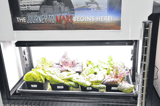 The eight lettuce plants, each with their own name, were harvested Thursday after a month-long growth and research cycle.