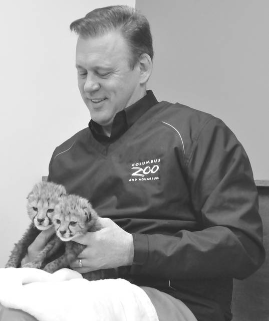 Columbus Zoo and Aquarium President/CEO Tom Stalf holds the two 16-day-old cheetah cubs during Friday's media appearance in Powell.