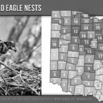 Bald eagle nest count completed
