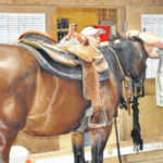 Nonprofit offers equine therapy