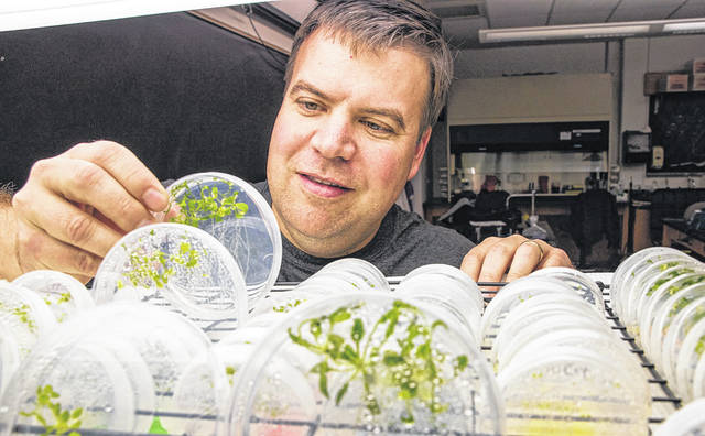 Ohio Wesleyan professor Chris Wolverton has earned two NASA grants to explore how plants respond to gravity, including sending research to be conducted on the International Space Station.
