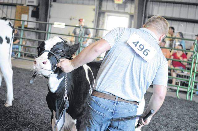 A scene from last year's Delaware County Junior Fair Market Cattle Show.