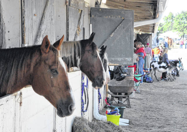Three horses peer out at passerbyers making their way to the 4-H Equestrian Show Ring during the 2020 Delaware County Fair.