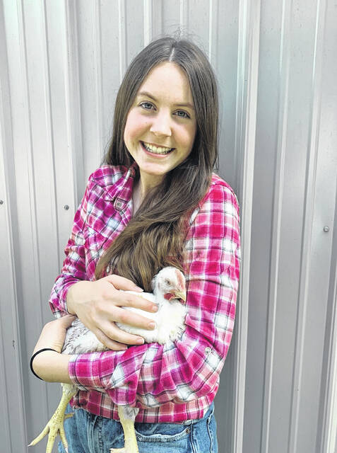 Maggie Pyle's pen of three market chickens was crowned champion at the 2021 Delaware County Fair. Pyle is pictured with one of those chickens.