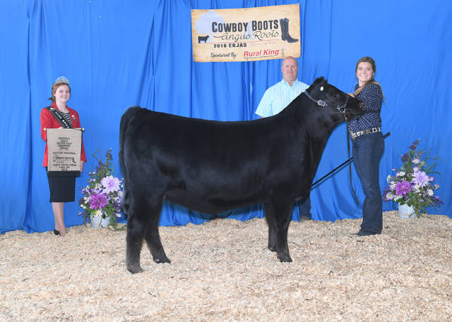 "SCC SCH Phyllis 792 won ""owned reserve early heifer calf champion"" at the 2018 Eastern Regional Junior Angus Show, June 15-16 in Lima. Kinsey Crowe, Eaton, owns the winning heifer. Photo by Linde Sutherly, on behalf of the American Angus Association."