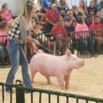 TCN FFA reports on activities