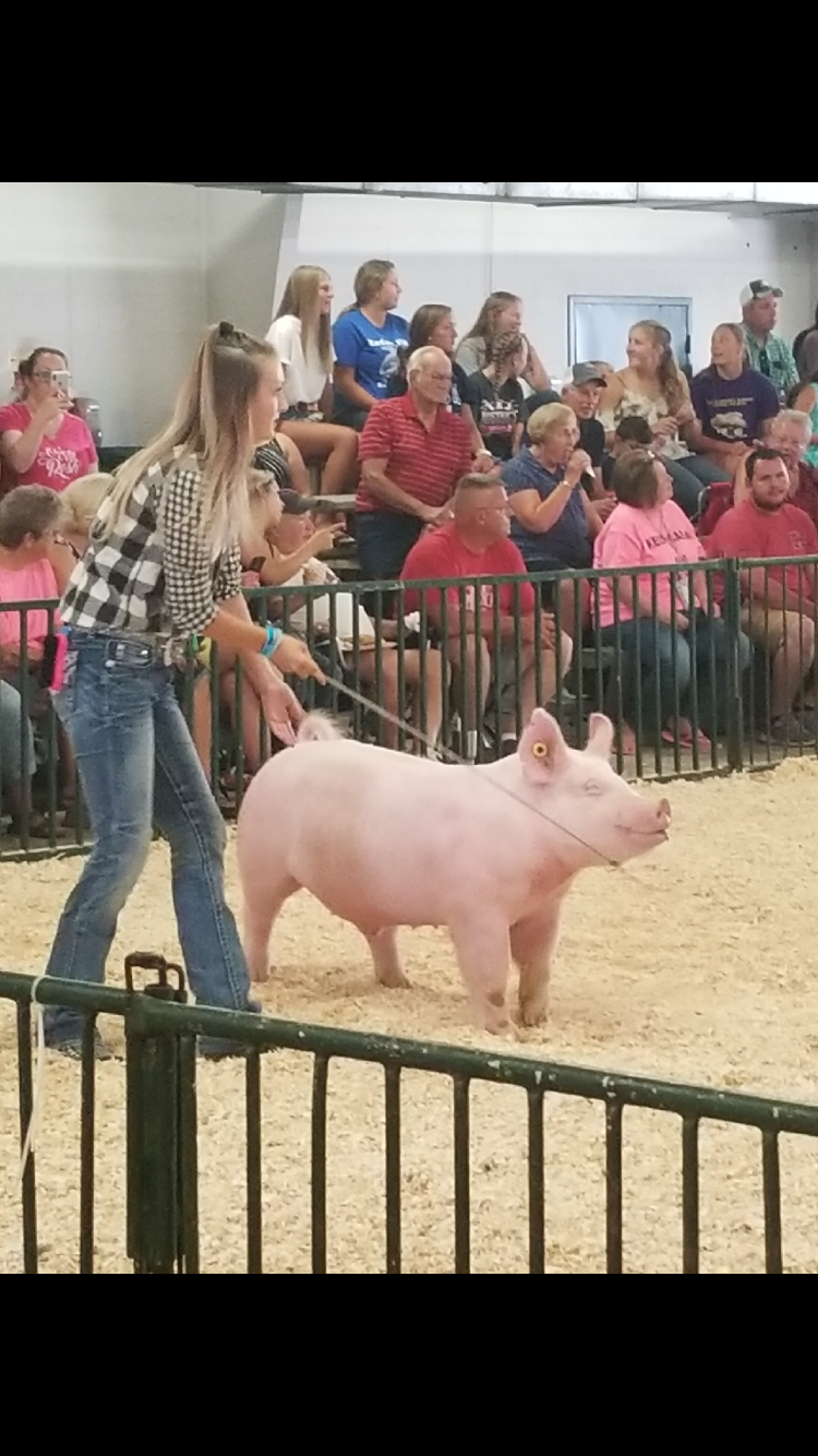 Over the summer 14 TCN-MVCTC FFA students showed and entered projects at the 2018 Preble County Fair.