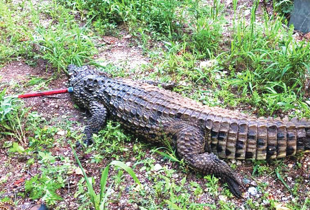 A 7.5-foot crocodile was shot by a state wildlife control officer after approaching a group of children playing in Bantas Fork stream near West Alexandria.