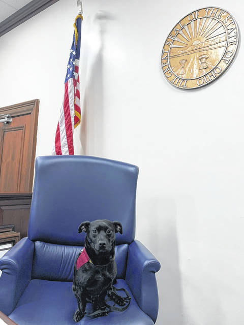 Juvenile Probation Officer Teresa Leyes would like to use her certified therapy dog, Charlie Bear, in Preble County Juvenile Court to help calm children who are anxious about being in court.