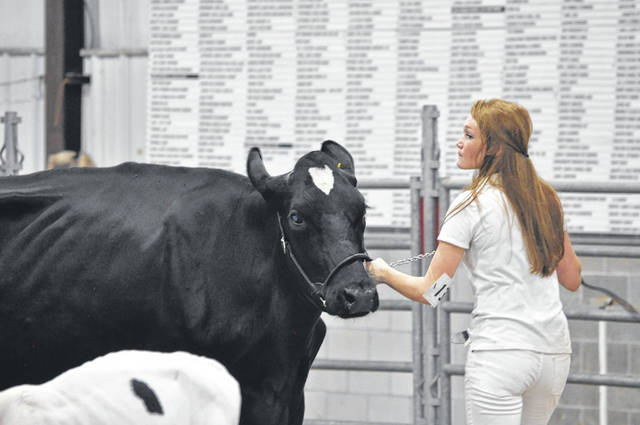 The Preble County Junior Fair Dairy Show (Showmanship/Jr. Fair Show) was held on Saturday, Aug. 1 to help kick off the first day of the 170th Preble County Fair. Exhibitors took their projects around the ring for judging.