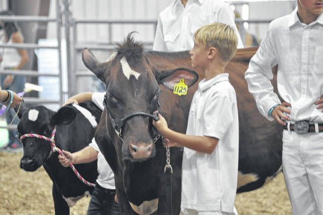 The Preble County Junior Fair Mentor/Pee Wee Dairy Show was held Saturday, Aug. 1 to help kick off the opening day of the 170th Preble County Fair. The 4-H kids, most with smiles on their faces, took their animals through the ring.