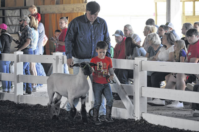 The young exhibitors during the Pee Wee Sheep Show on Tuesday, Aug. 3, were assisted by other Jr. Fair exhibitors.