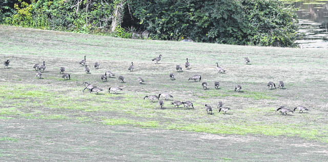 Earlier this year, Eaton City Council passed Ordinance 21-08, prohibiting the feeding of waterfowl in the city, in hopes of stopping damage and pollution at Crystal Lake Park.