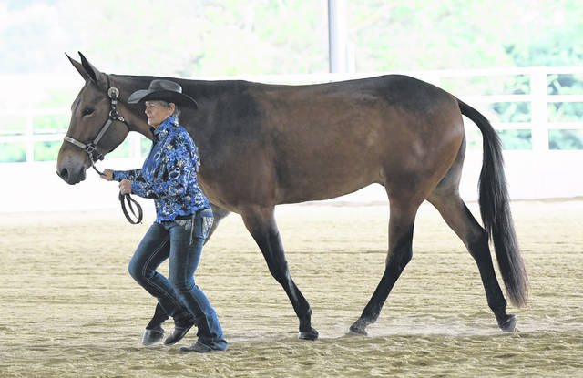 A Mule and Donkey show was one of the highlights of the opening weekend of the Preble County Fair, which ran from July 31-Aug. 7.