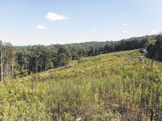 Originally forested land had been cleared for farming and lumber use in the 1700s and 1800s. Greater erosion rates and poor soil composition were affected by such practices before the Wayne National Forest, a portion pictured here, was created in reforestation efforts.