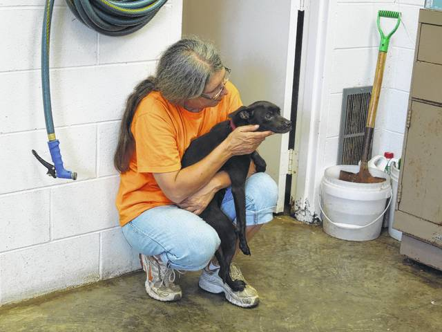 The Gallia Canine Shelter attends to the needs of area strays, adoptions and is open from 10 a.m. to 1 p.m., Monday through Saturday.