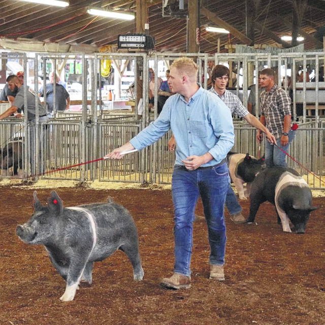 Derek Henry, a 2019 graduate of Gallia Academy High School, competes in the showmanship category with his market hog. Henry took first place in his showmanship class on Tuesday at the Gallia County Junior Fair.