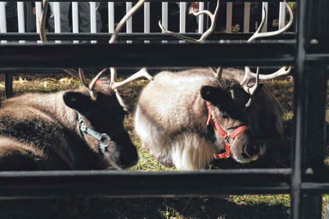 "Bossard Memorial Library hosted reindeer during the Gallipolis in Lights Lighting Ceremony Wednesday, allowing local children to get up close and personal with Santa's special helpers. The reindeer ""flew in"" from Pine Acres Reindeer Farm in LaRue."