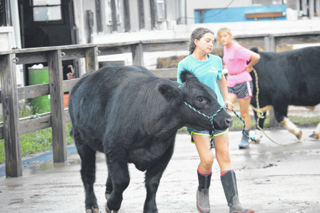 Exhibitors at last year's Gallia County Jr. Fair prepare to show their livestock projects. (OVP File Photo)