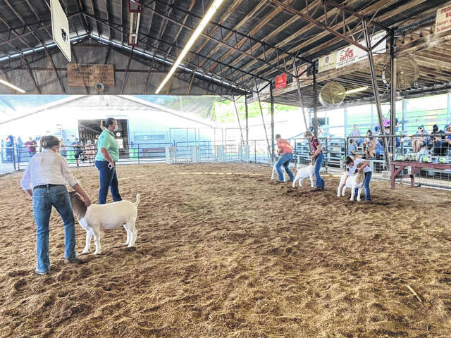 Pictured is what will become a familar scene during fair week with young exhibitors, and their livestock projects, in the show ring, wearing masks. Here, exhibitors in the goat breeding show carefully watch the judge (also wearing a mask) while giving fellow 4-H members space. (Gallia OSU Extension | Courtesy)