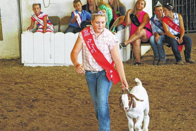 Scenes from past livestock shows at the Gallia County Jr. Fair. (OVP File Photo)