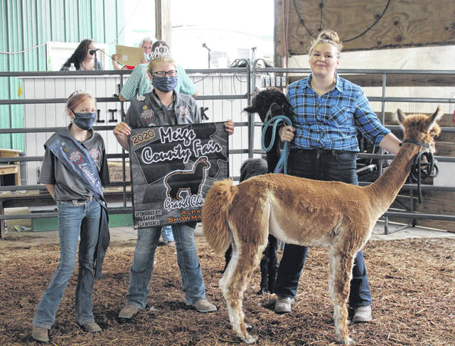 Cassidy Bailey was the lone entry in the Meigs County Junior Fair Alpaca Show on Friday evening, walking her alpacas around the show arena through the obstacles. Bailey was named the Grand Champion Alpaca Showman, and received Grand Champion and Reserve Champion for her alpacas. Also pictured are Meigs County Fair Queen Kristin McKay and Livestock Princess Nevada Johnson.