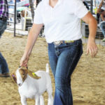 Market Goat grand and reserve champions