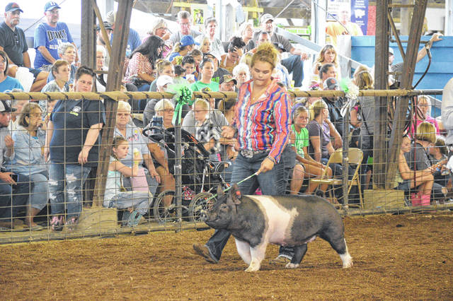 An exhibitor competes in the show ring with her market hog at the 2019 Gallia County Jr. Fair.