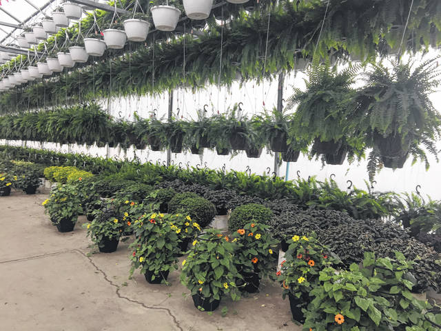 Hanging baskets and containers of plants fill the greenhouses at Roush Brothers Farm and Greenhouses.