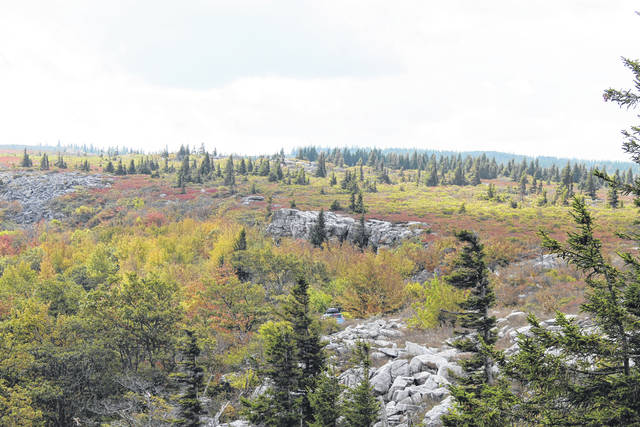 """A view of the Dolly Sods Wilderness in the Allegheny Mountains of eastern West Virginia. """"Dolly Sods"""" is part of the Monongahela National Forest."""