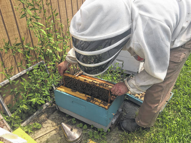 Chris Blank is pictured inspecting one of the hives in his backyard.